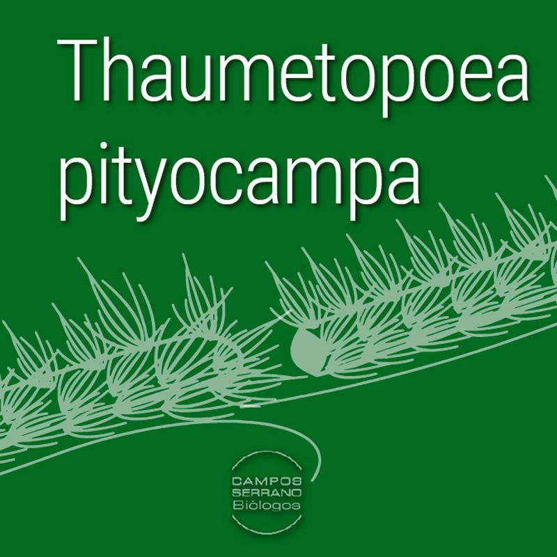 Endoterapia-como-tratamiento--contra-la-Procesionaria-en-Murcia,-Aguilas,-Lorca,-Almeria-por-Campos-Serrano-biólogos
