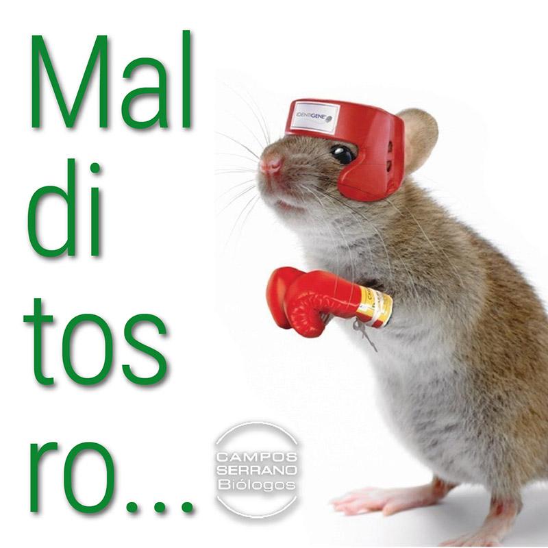 Malditos-roedores-por-Campos-serrano-biologos-desratizacion-en-Murcia-y-Almeria