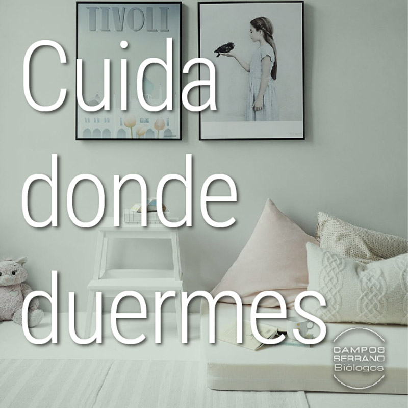 Los-alojamientos-turisticos-son-foco-de-plagas-de-chinches-por-Campos-Serrano-biologos-Murcia-y-Almeria