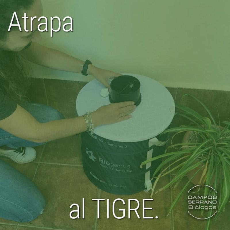 trampas-de-captura-mosquito-tigre-campos-serrano-biologos-murcia-y-almeria